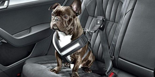Новые правила перевозки питомцев в машине