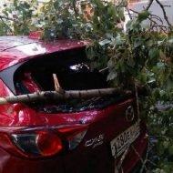 Как возместить ущерб, если на машину упало дерево?