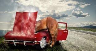 Под копытом: лошадь и водитель отделались легким испугом. Видео дня